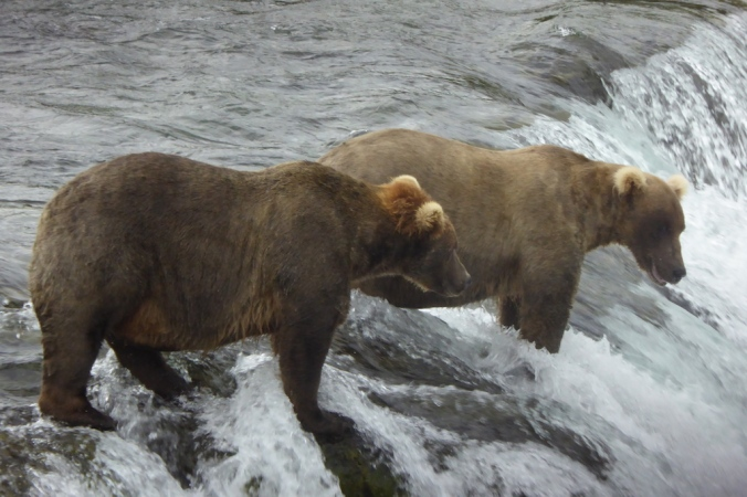 bears standing at the edge of a waterfall