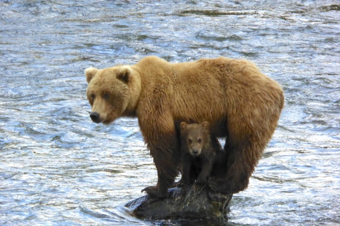Mother bear standing on rock. Her cub sits on the rock between her legs.