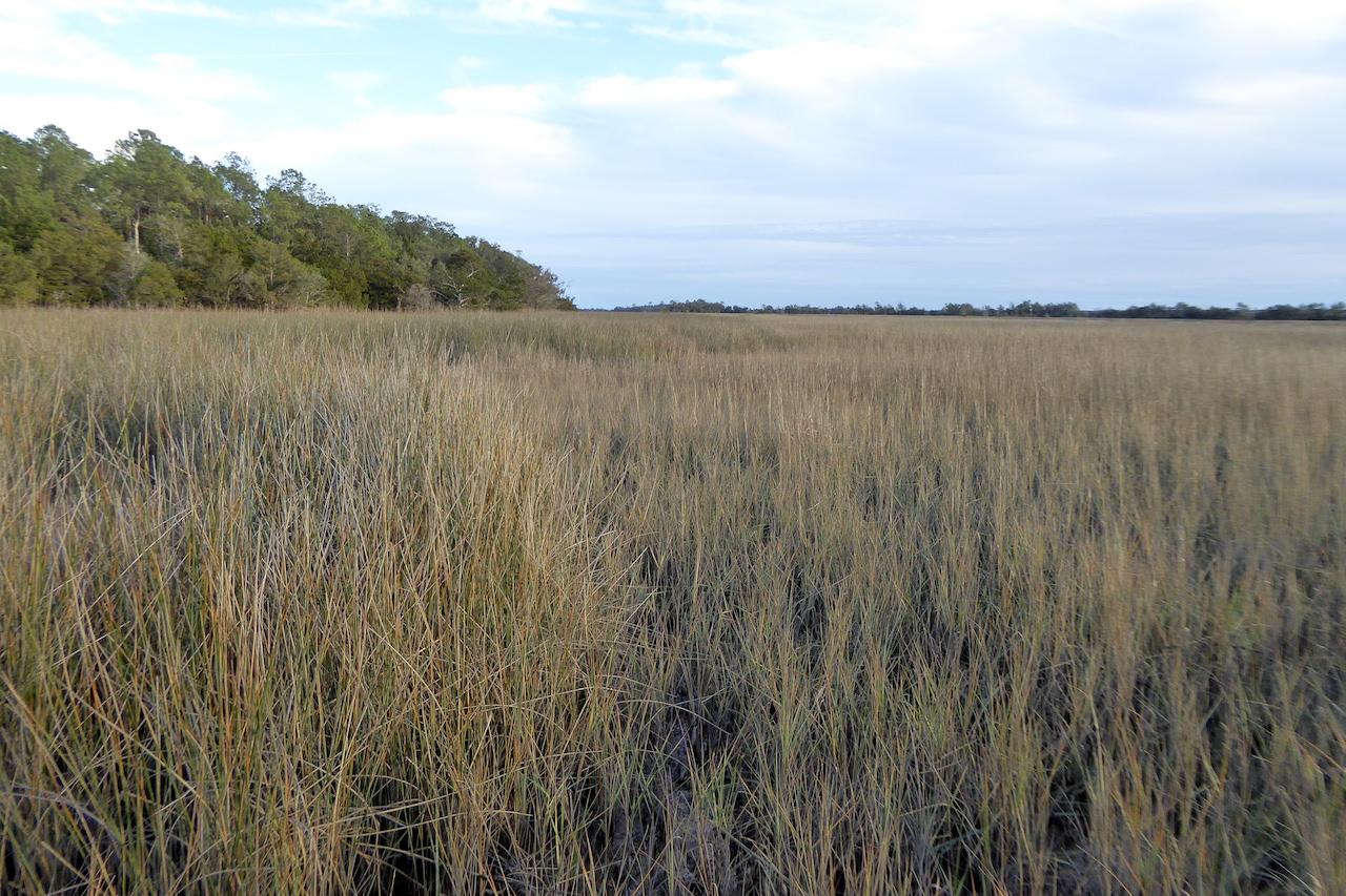 brown grass of salt marsh, taller rushes on left of photo, trees on horizon