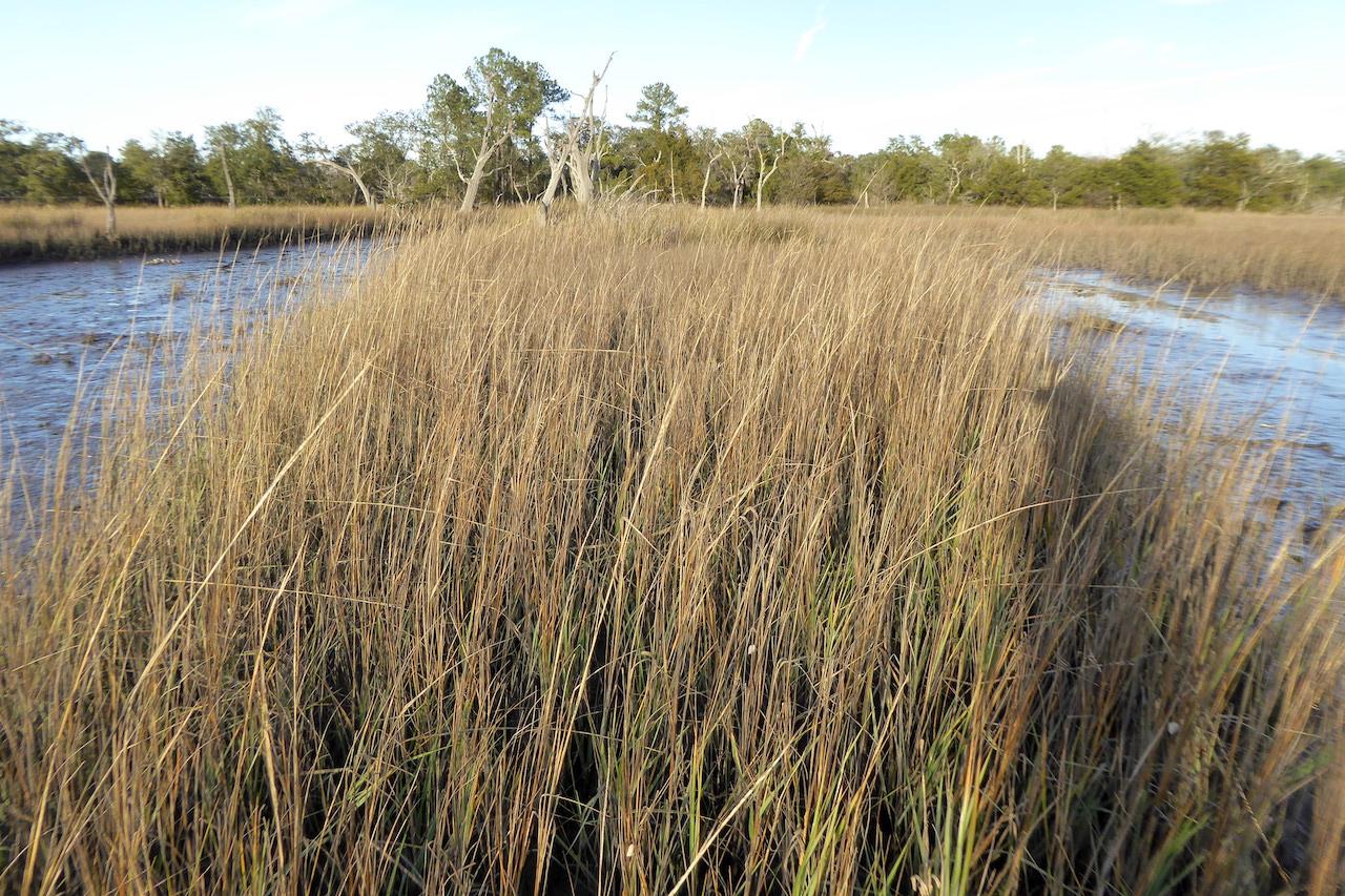 golden brown grass, trees seen on horizon