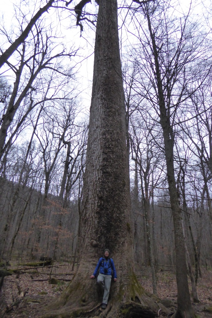 person standing at base of large tree