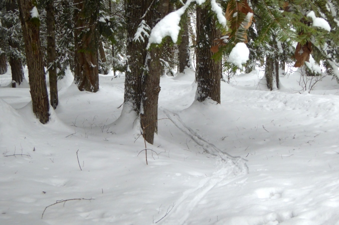 ski tracks through forest