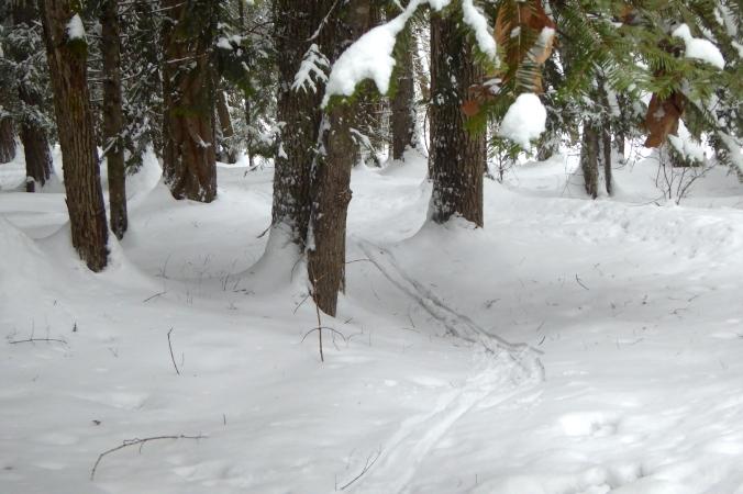 ski tracks through forest