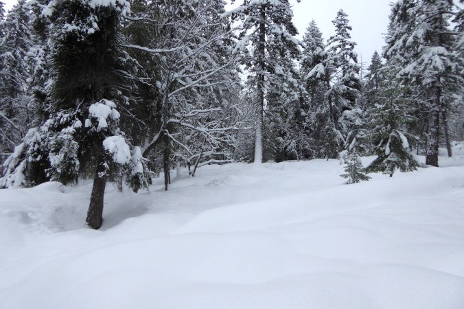 deep snow and trees