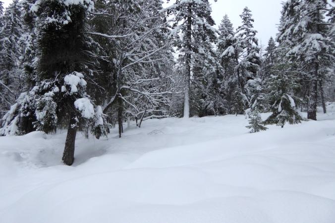 deep snow and trees
