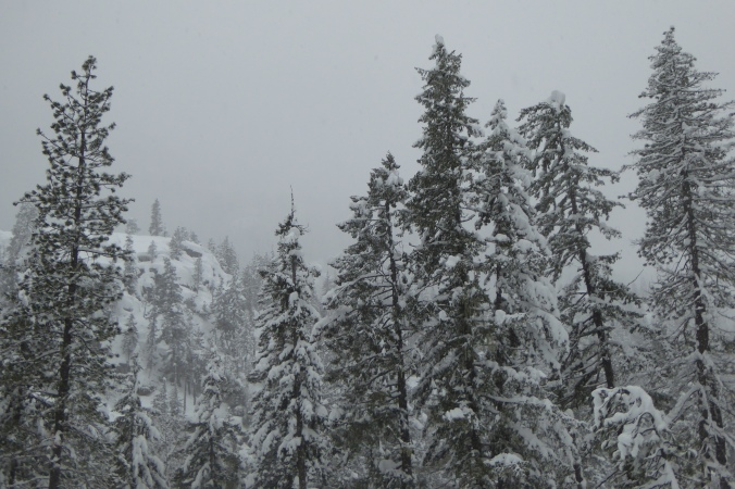 snow covered trees under overcast sky
