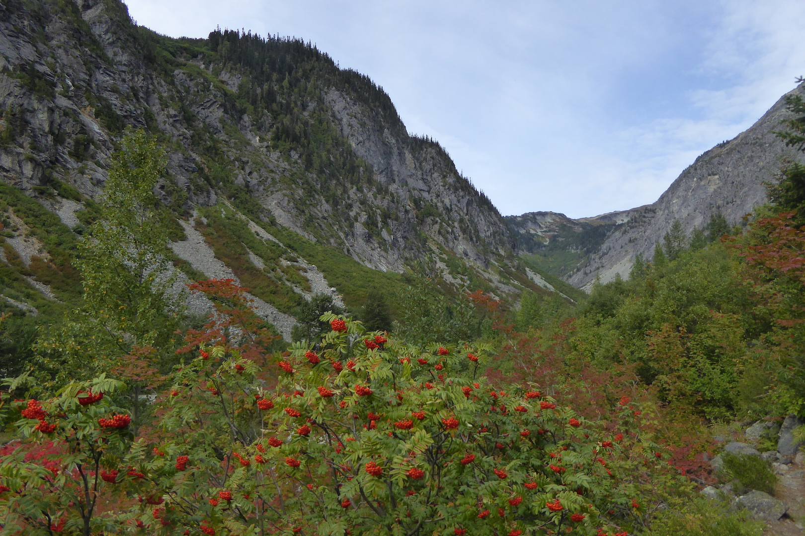 Mountain valley scene. Steep walled mountains with red-berried shrub in foreground.