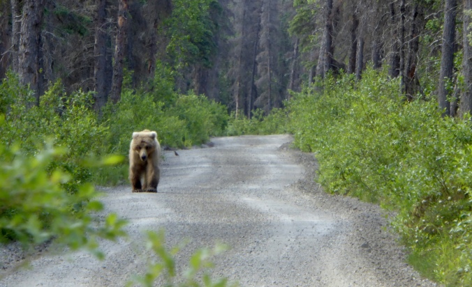 bear walking on dirt road through forest