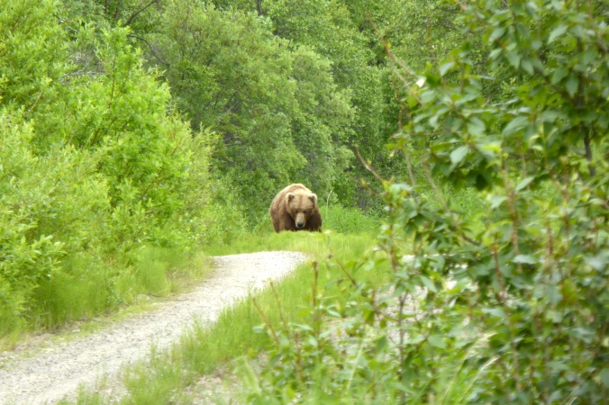 Bear walking on dirt road through forest.