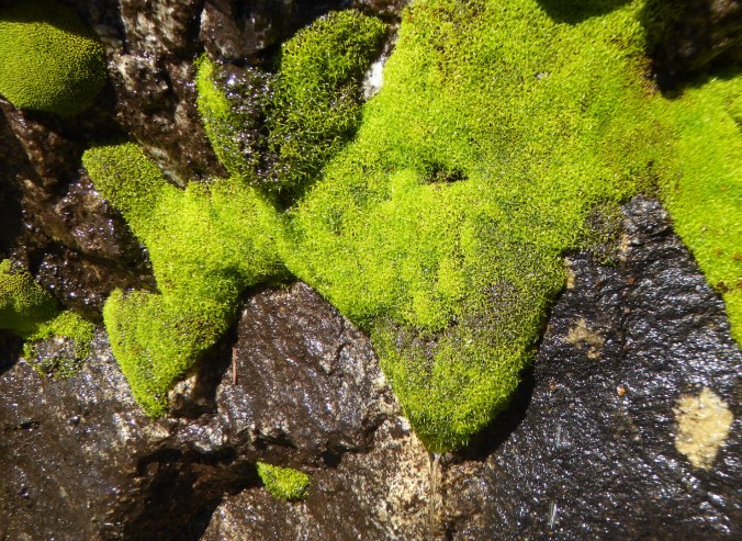 bright green moss, dripping with water, on side of rock