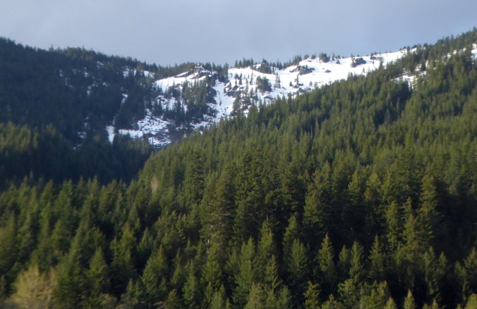 Forests on snow-covered mountainside