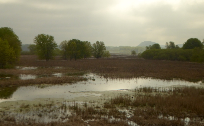 flooded marsh bordered by forest