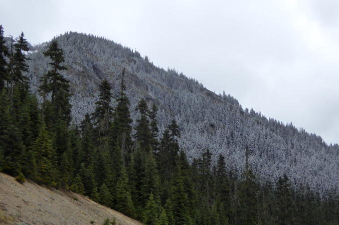montane forest with light snow at higher elevation