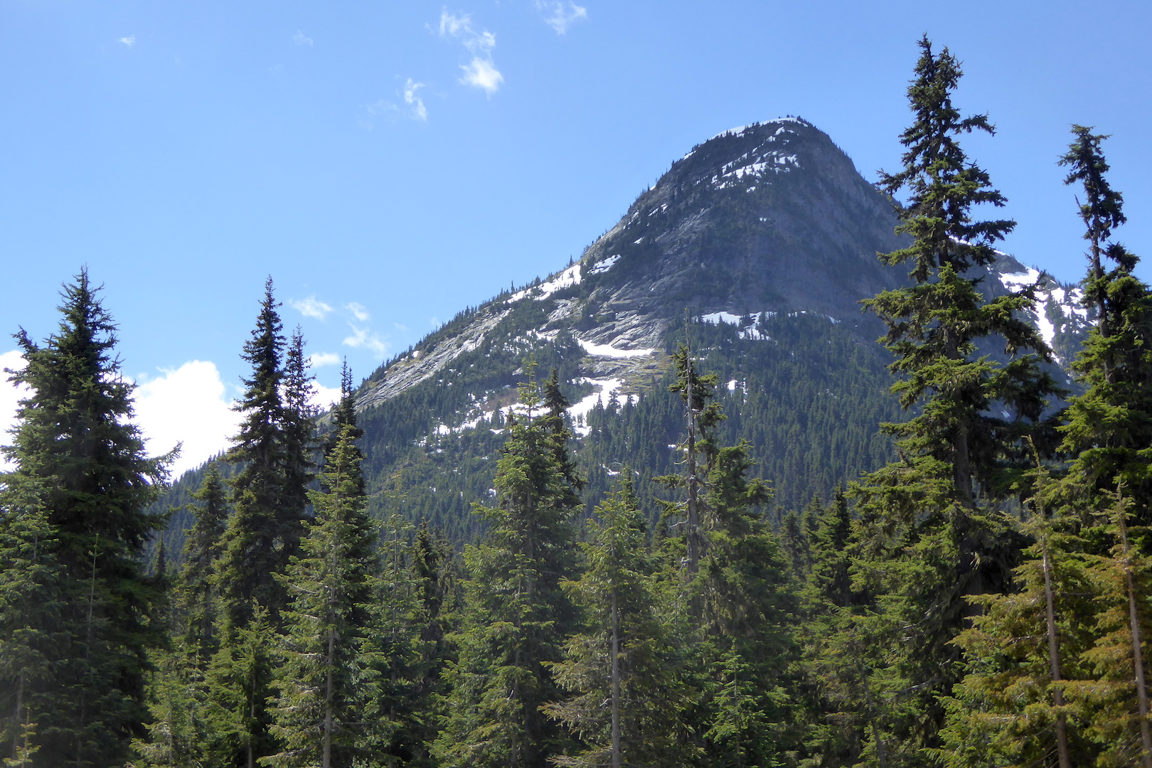 view of mountain peak and conifer trees