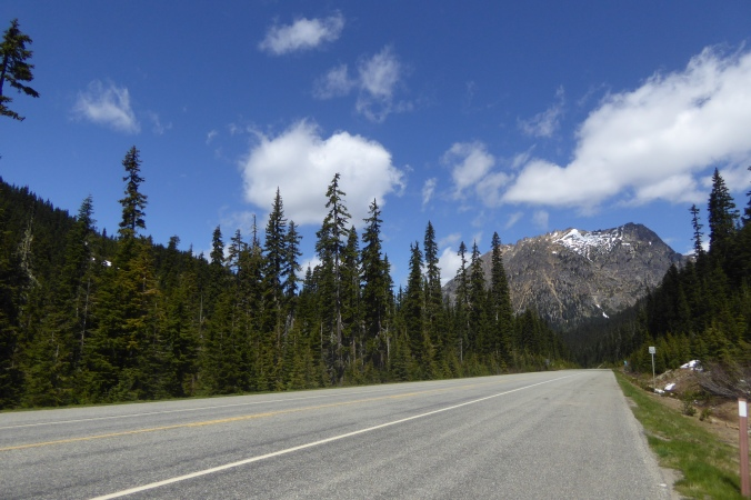 view of road surrounded by coniferous trees and mountain in background