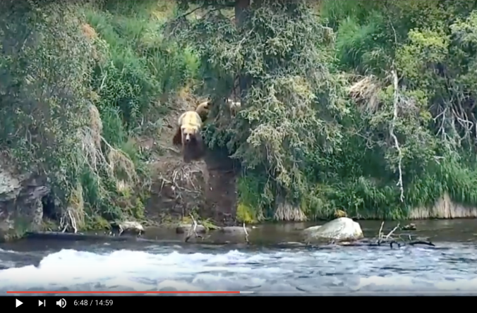 bears standing on his near river