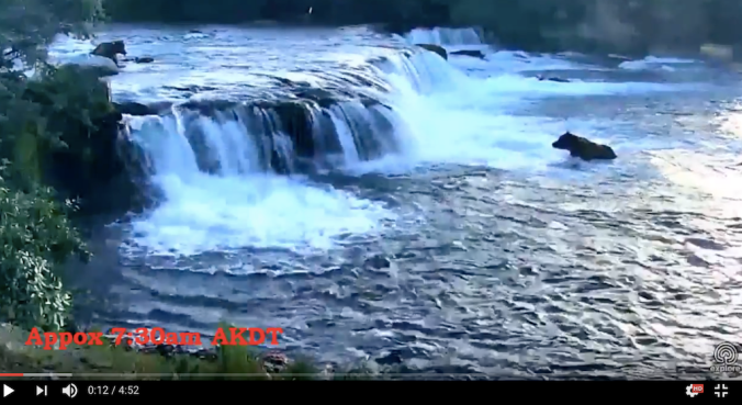 screen shot from video of waterfall. one bear sits below the falls and another is in the river above the falls