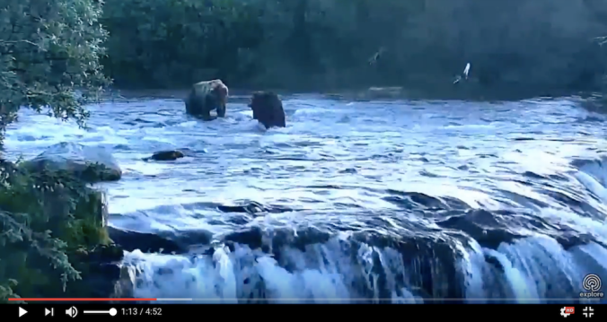screen shot from video. two bears standing in river above the falls.