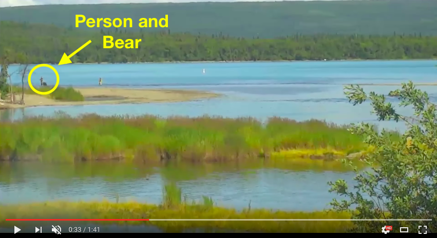 "Screen shot of bear and person near each other. Text reads ""Person and bear."" The person and bear are in the yellow circle."