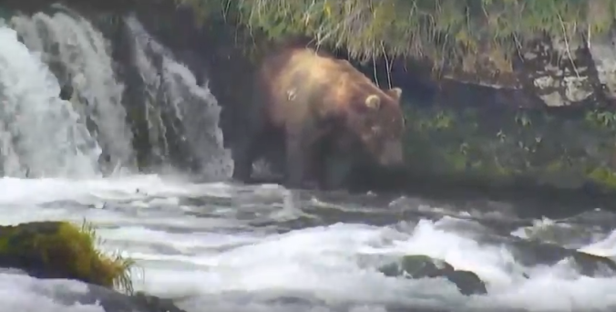 bear standing in water near waterfall