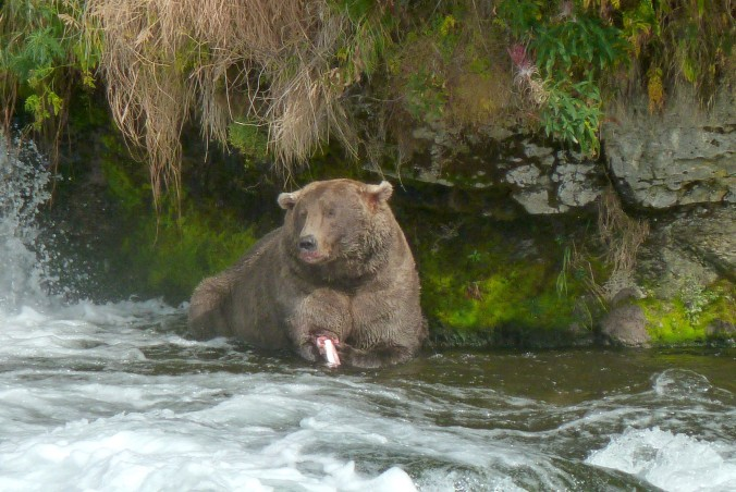 fat bear sitting in water in front of rock wall