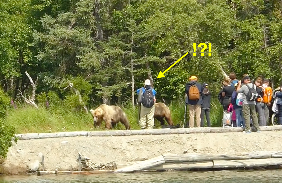 Bear near group of people. Arrow pointing towards person who is separate from group.