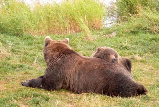 bear cub resting its head on its mother