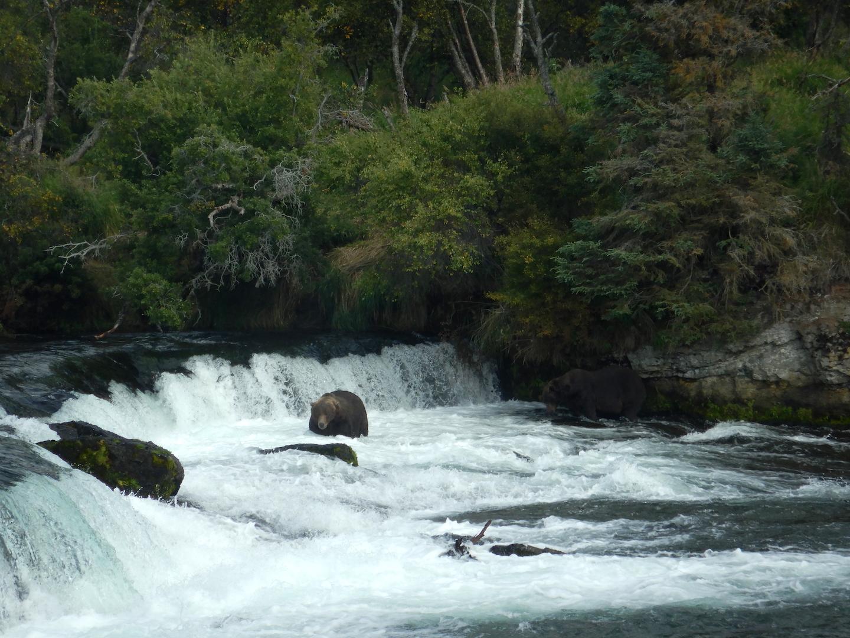Bears standing at waterfall