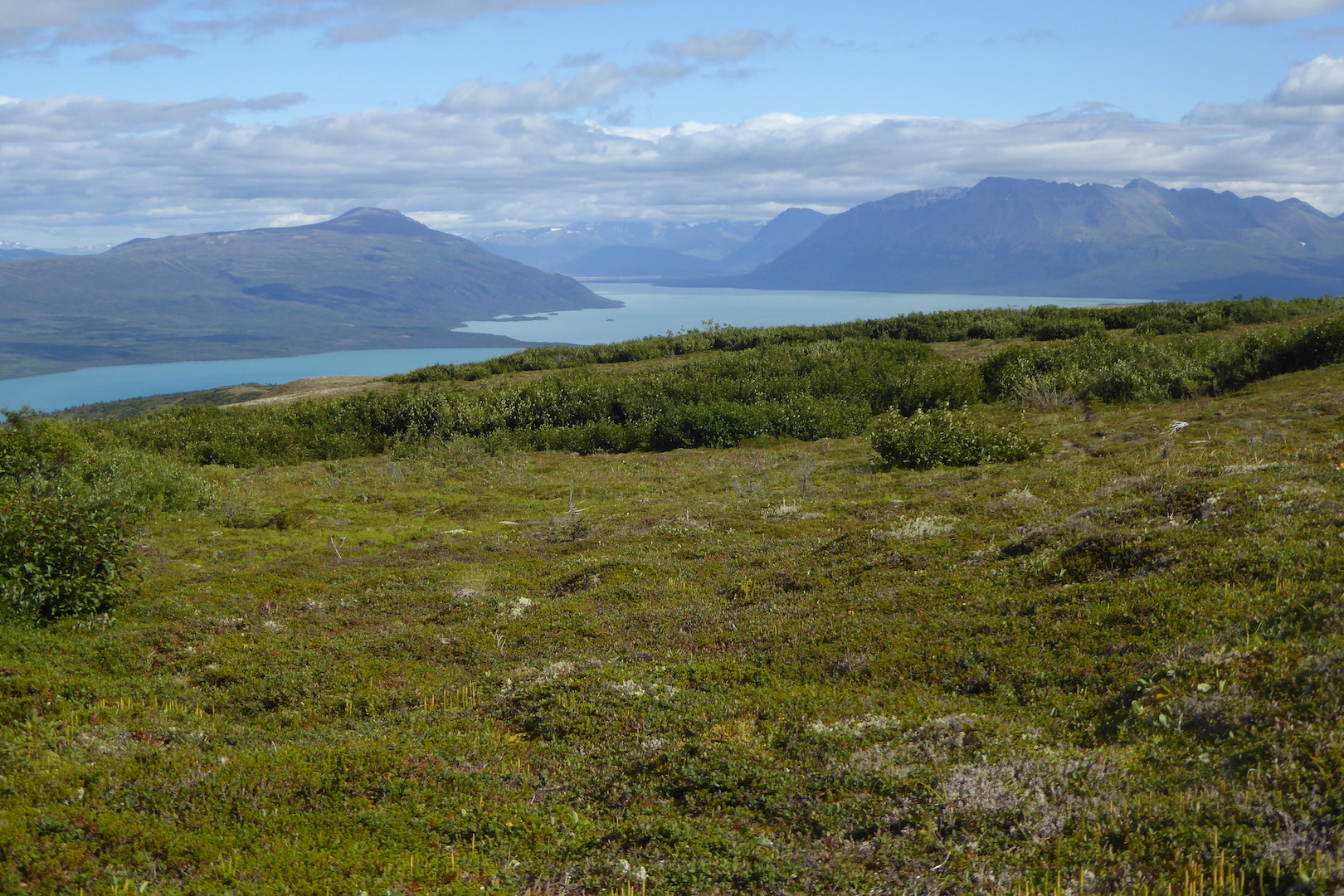 view of tundra and shrubs with mountains and lake in background