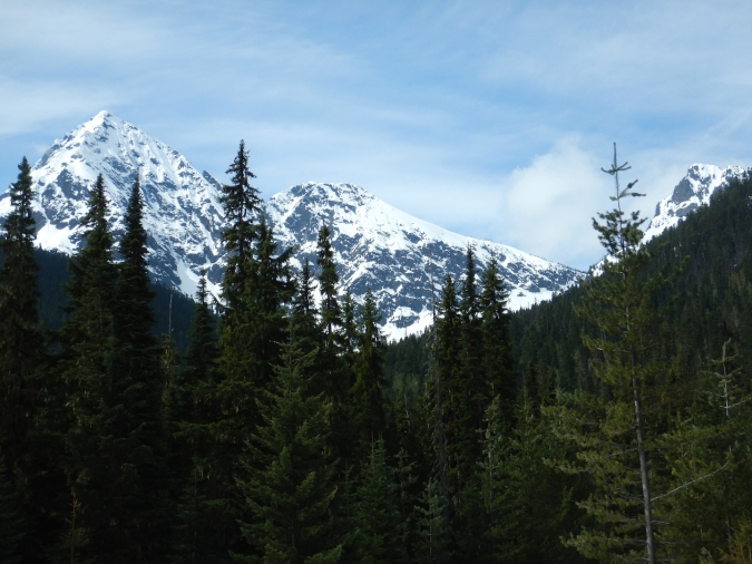 view of snow-capped mountains and coniferous forest