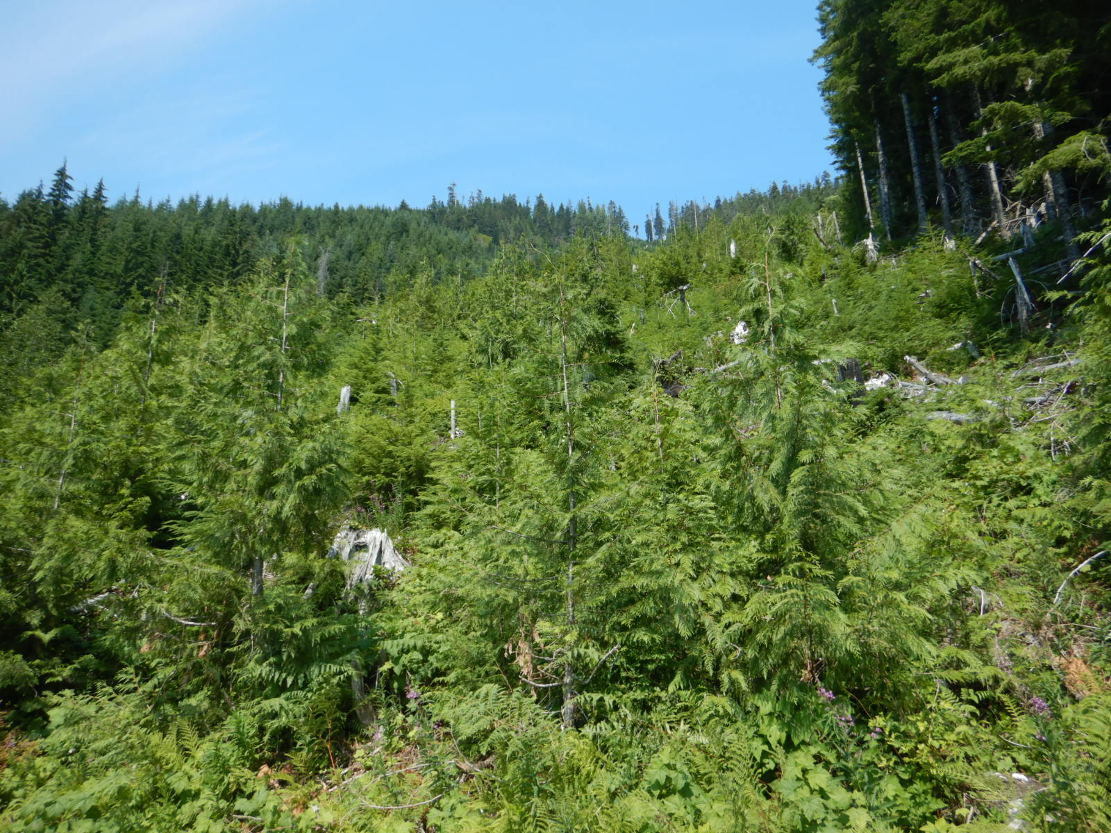 view of short trees caused by avalanche