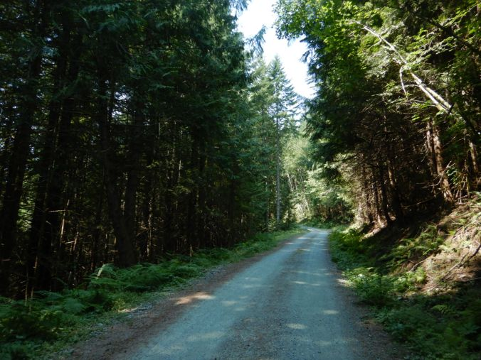 view of dirt road lined with thick forest