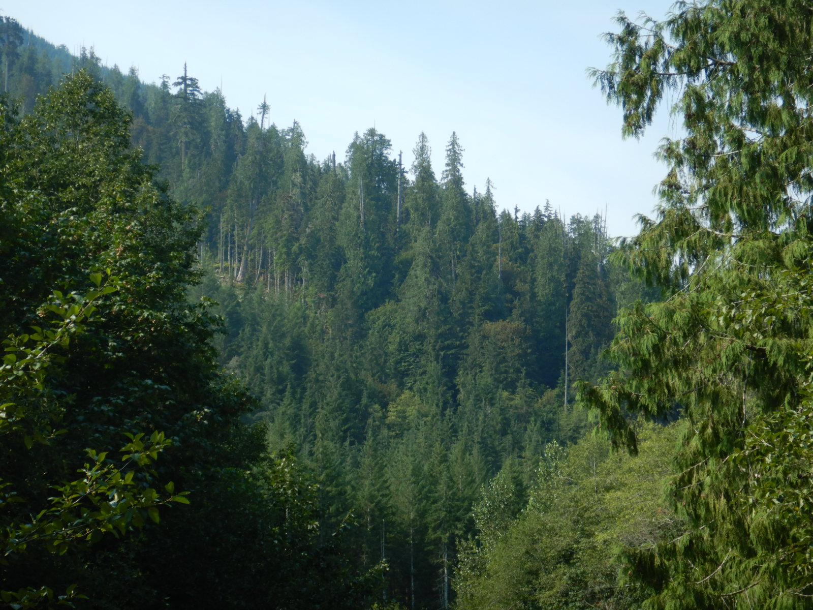 view of forest with tall trees on horizon