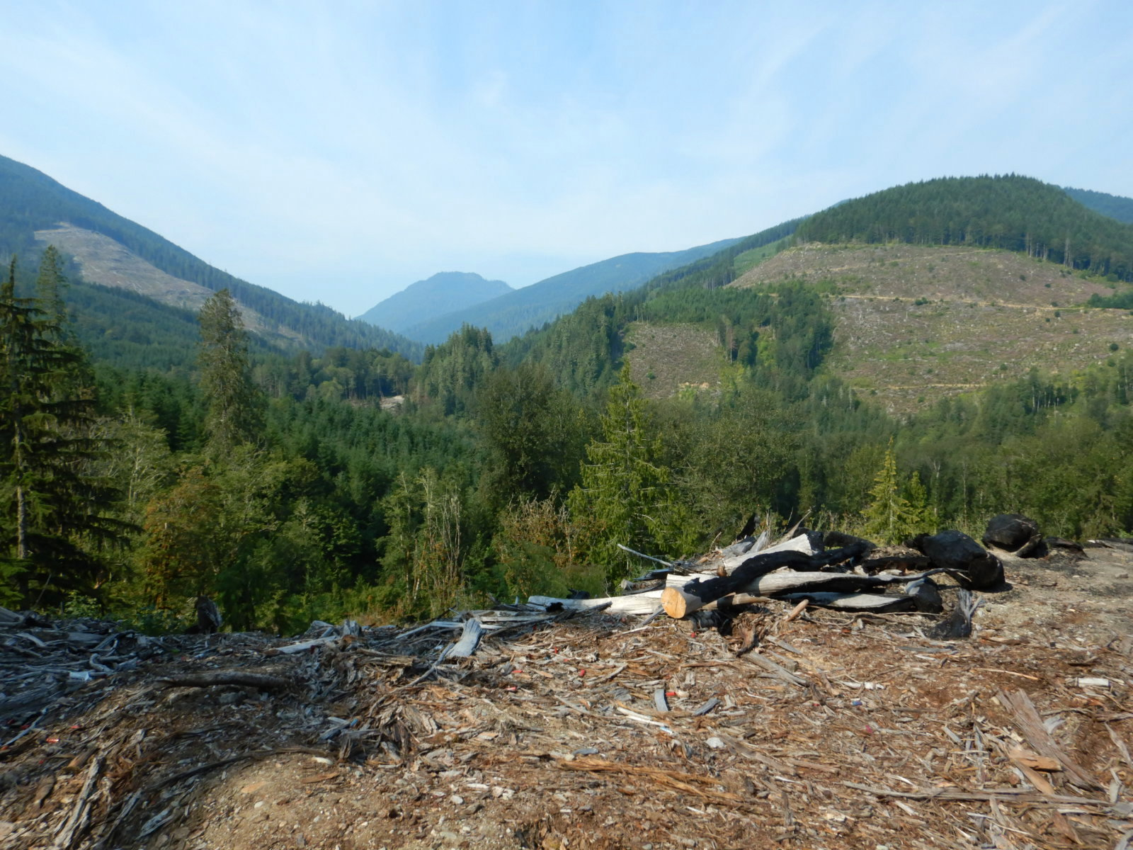 view of forest area with maturing trees and recently clear cut areas