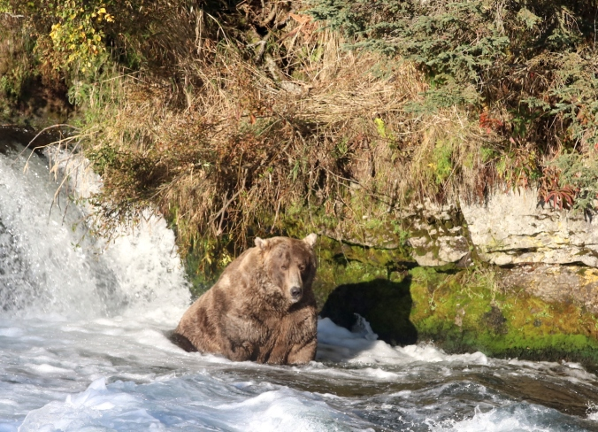 bear sitting in water below waterfall