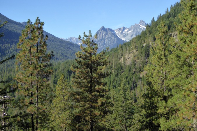 view of forested valley with tall craggy mountains on horizon