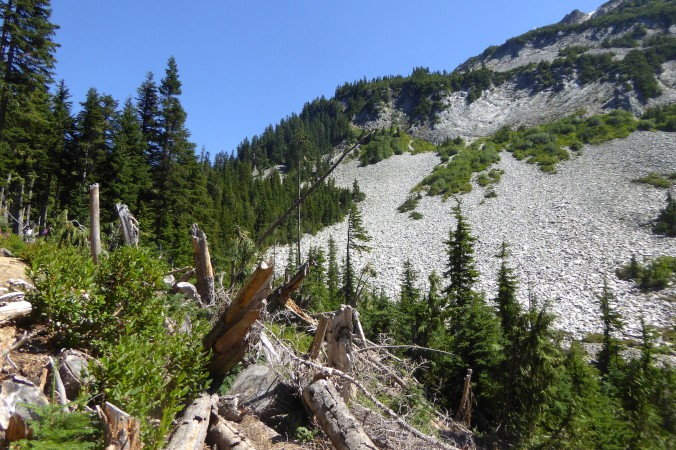 broken trees in foreground with forests and mountain in background