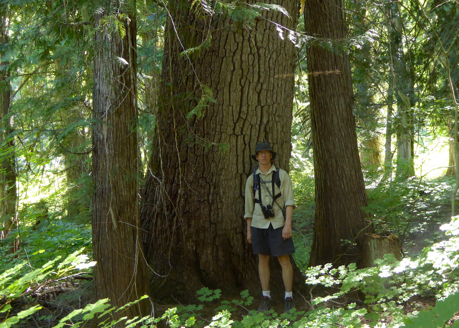 person standing next to large tree with smaller trees nearby