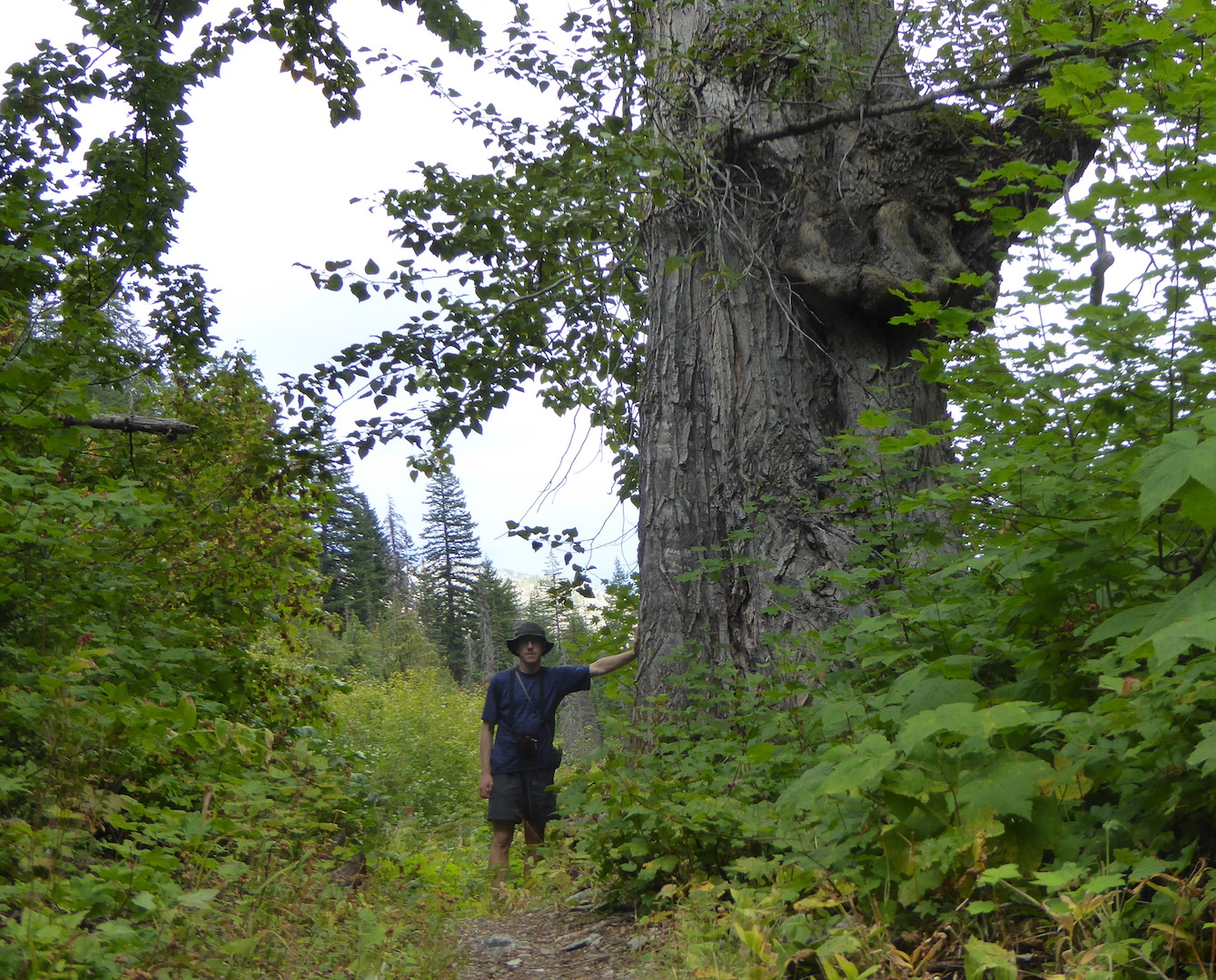 person standing next to large deciduous tree