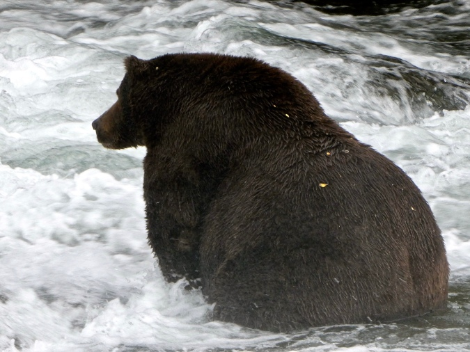 silhouette of fat bear sitting in river
