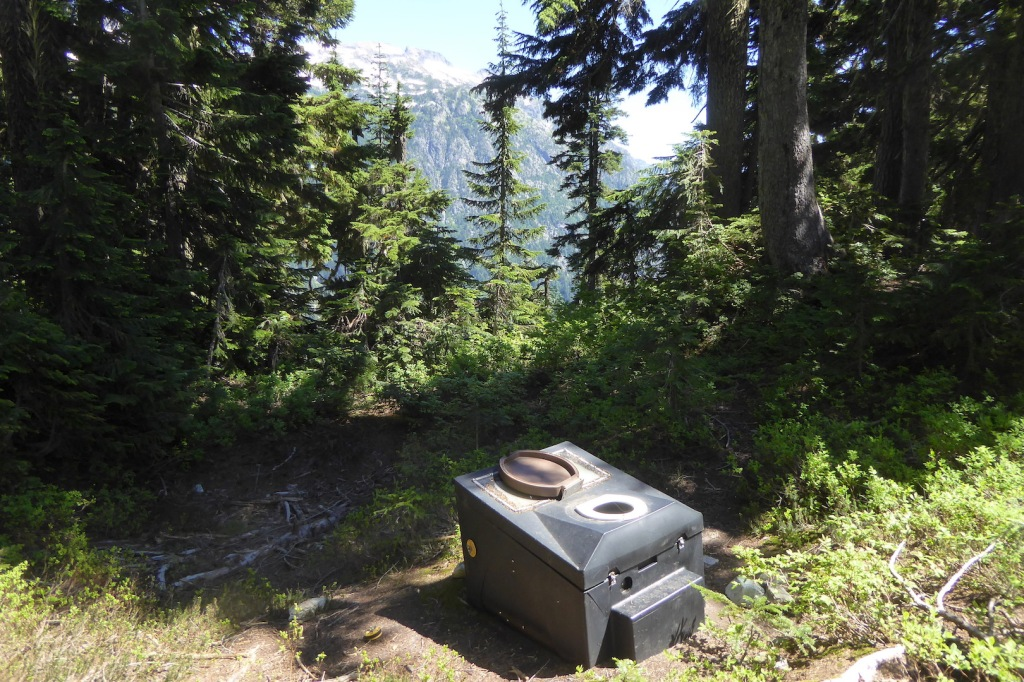 A vault-like toilet sits in a forest