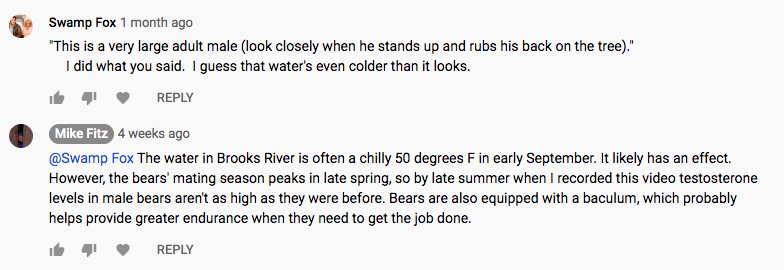 "Screen shot of two comments from a youtube video. Text says:   Swamp Fox1 month ago ""This is a very large adult male (look closely when he stands up and rubs his back on the tree)."" I did what you said. I guess that water's even colder than it looks.  Mike Fitz 4 weeks ago @Swamp Fox The water in Brooks River is often a chilly 50 degrees F in early September. It likely has an effect. However, the bears' mating season peaks in late spring, so by late summer when I recorded this video testosterone levels in male bears aren't as high as they were before. Bears are also equipped with a baculum, which probably helps provide greater endurance when they need to get the job done."