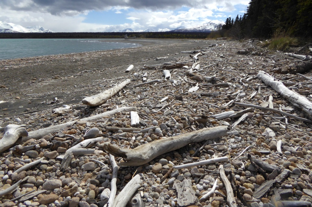 pumice and driftwood covered beach. Lakeshore is at left. Trees and grass at right. Snow covered mountains on far horizon.