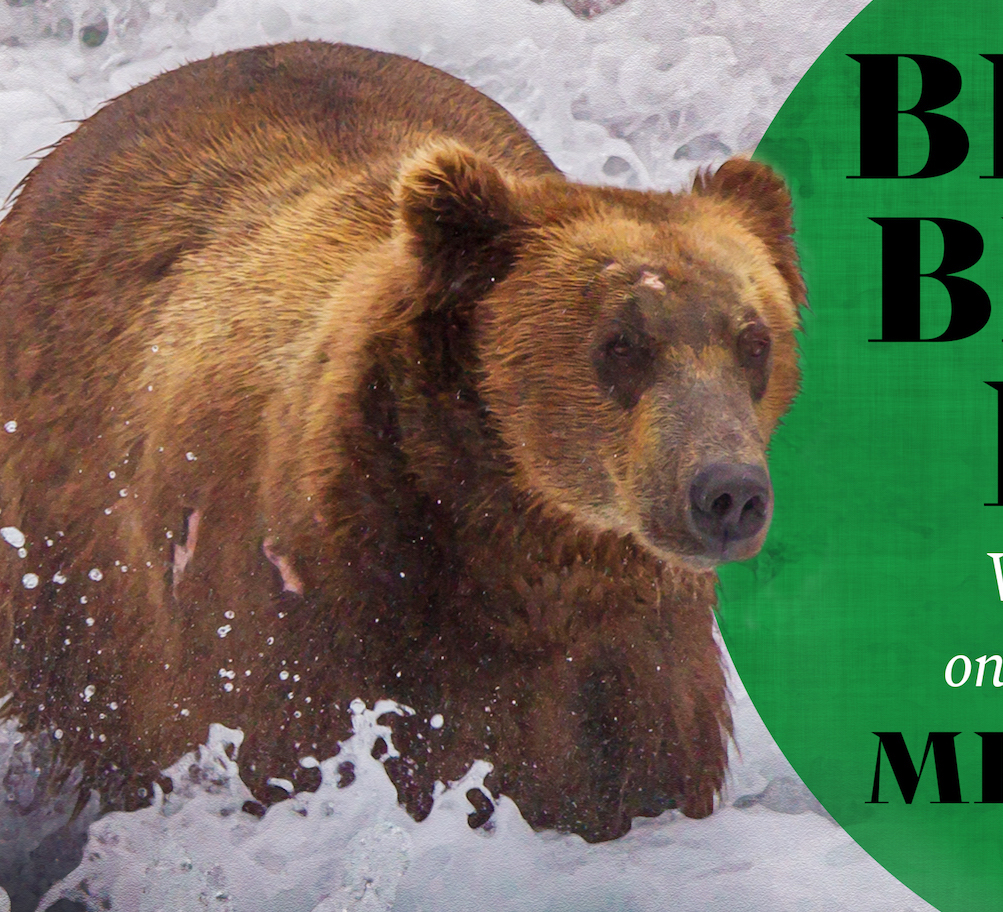 Screen shot of section of book cover. Bear stands in foamy water facing the camera.