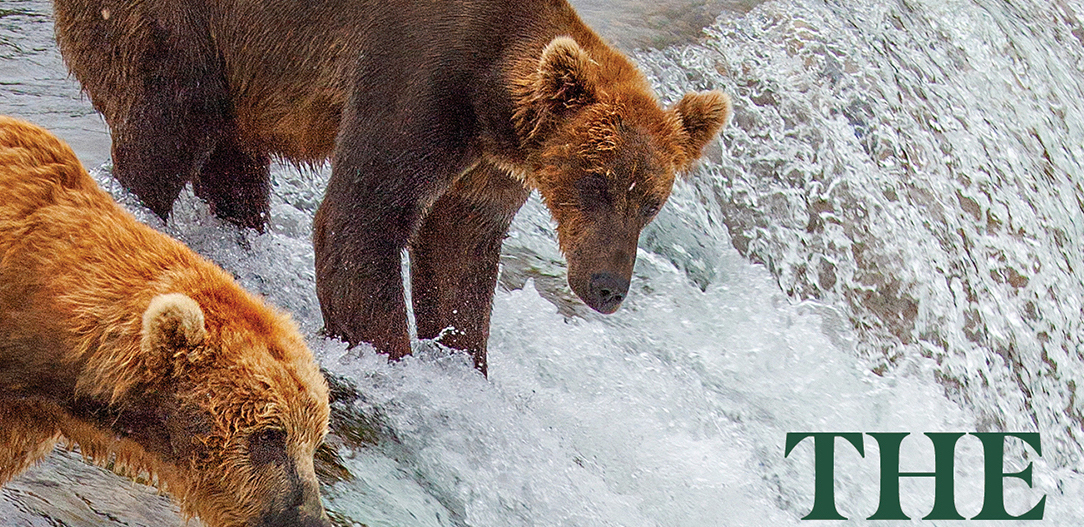 Screen shot of section of book cover. Bear stands on edge of waterfall at upper left.